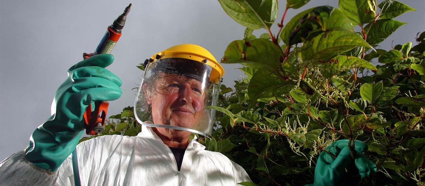 knotweed removal expert performing Japanese Knotweed removal